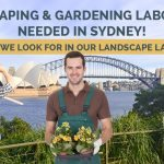 Landscape & Gardening Labourers Needed in Sydney