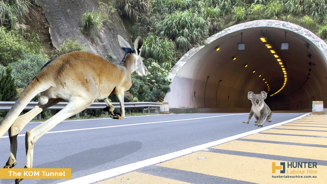 The KOM Kangaroo and Other Marsupial Tunnel - Hunter Labour Hire