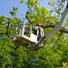 Arborists and Groundworkers Labour Hire Sydney - HLH Group