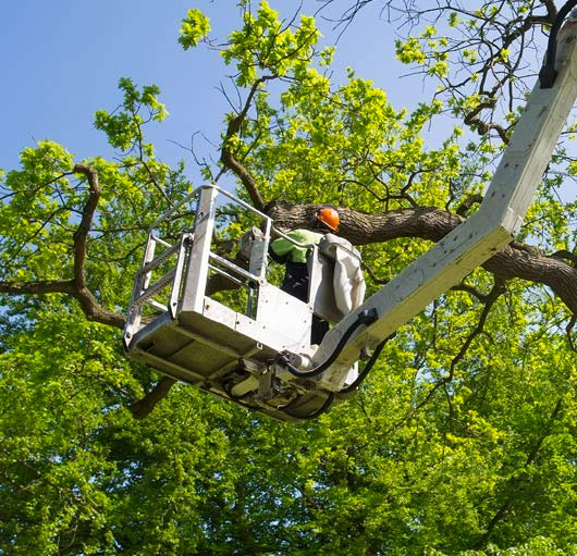 Labour Hire Tree Management - Labour Hire Sydney